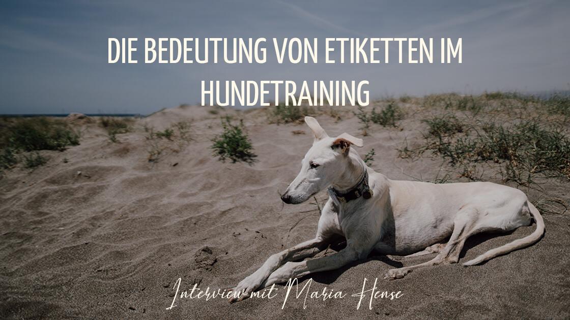 Hund_Galgo_entspannt_am_Strand_Hundetraining_